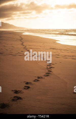 Footprint at the beach for explore in wild scenic place concept during alternative tourism vacation - dramatic cloudy sky and mountains in background  - Stock Photo