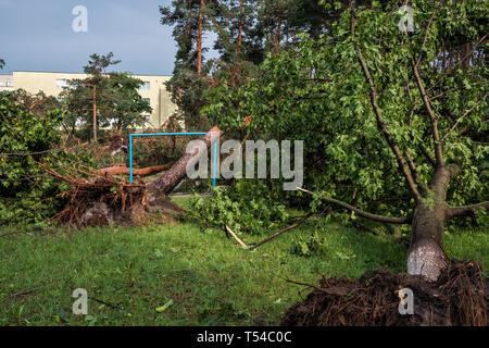 The aftermath of a hurricane. Broken trees in the park after the storm. Extreme weather concept - Stock Photo