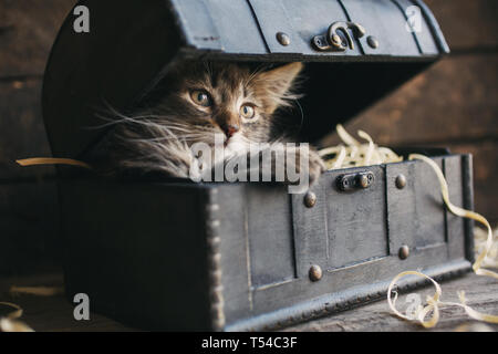 A small, fluffy kitten lying in a box with sawdust. - Stock Photo