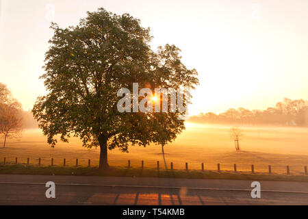 Northampton, UK. 21st April 2019, Weather. Early morning mist over Abington Park, a Horse Chestnut. Aesculus hippocastanum (Hippocastanaceae), stands in silhouette, with the sun rising behind, forecast for another hot bright day. Credit: Keith J Smith./Alamy Live News - Stock Photo