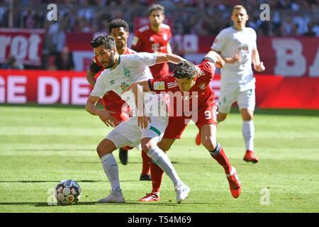 Munich, Germany. 20th Apr, 2019. Nuri SAHIN (Werder Bremen), action, duels versus Robert LEWANDOWSKI (FC Bayern Munich). Soccer 1. Bundesliga, 30.matchday, matchday30, Bayern München M) - SV Werder Bremen (HB), on 20.04.2019 in Muenchen ALLIANZARENA, DFL REGULATIONS PROHIBIT ANY USE OF PHOTOGRAPH AS IMAGE SEQUENCES AND/OR QUASI-VIDEO. | usage worldwide Credit: dpa/Alamy Live News - Stock Photo