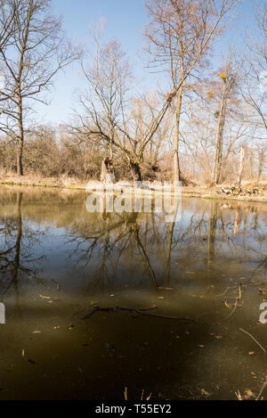 Slanaky river lake near Studenka city in CHKO Poodri in Czech republic during beautiful spring day with trees reflected on water fround and clear sky - Stock Photo