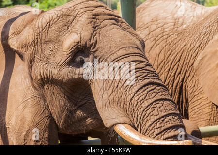 Portrait of an elephant - Stock Photo