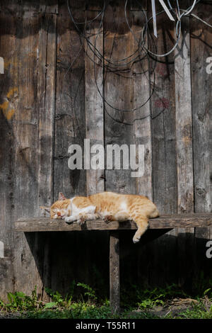 brown cat sleeping on a copyspace bench - Stock Photo