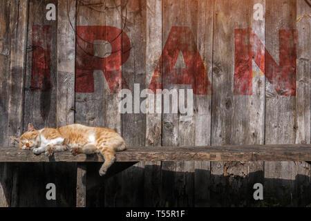 brown cat sleeping on a bench in Iran. inscription Iran - Stock Photo