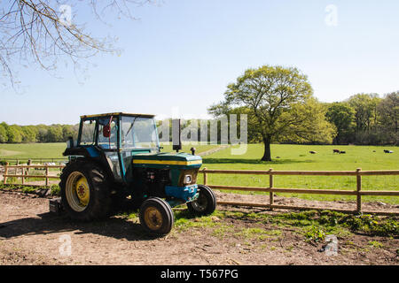Green tractor on an English farm with cattle in the background - Stock Photo