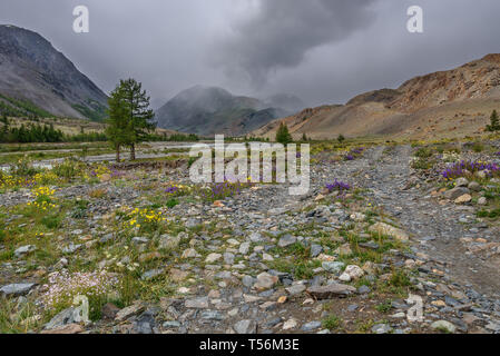 Bright beautiful violet, yellow and white flowers on a rocky road in the mountains against a cloudy sky and clouds - Stock Photo