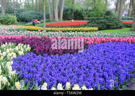 The Keukenhof, Garden of Europe - Stock Photo