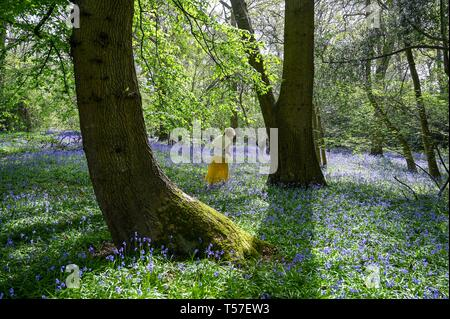 Haywards Heath Sussex, UK. 22nd Apr, 2019. A carpet of Spring bluebells in full bloom in woods near Haywards Heath Sussex on another beautiful hot sunny day Credit: Simon Dack/Alamy Live News - Stock Photo