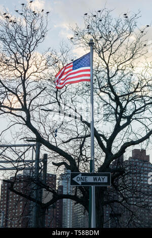 American Flag, Stars and Stripes, blowing in the wind, on a pole with a ONE WAY sign, with birds sitting in a leafless tree in the background, Midtown