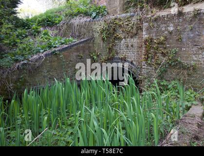 Rushes in pond with old brick bridge in background - Stock Photo