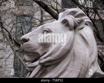 One of two lion sculptures (Patience and Fortitude) that stand outside New York Public Library in Fifth Avenue, Manhattan, New York City, USA - Stock Photo
