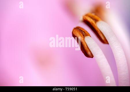 Flower pistil ultra macro detail - Stock Photo