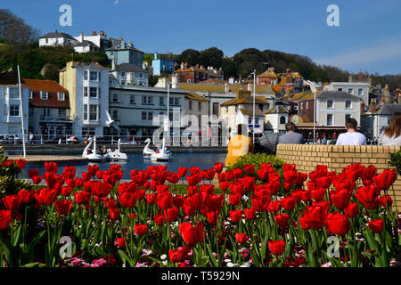The Old Town Boating Lake with swan pedalos in Hastings, East Sussex, UK - Stock Photo