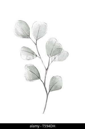 Silver dollar eucalyptus grayscale watercolor illustration with gray eucalyptus tree twig branch with round leaves heart shaped plant wedding decorati - Stock Photo