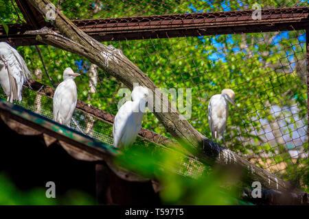 White Egret at the zoo. Bird in the zoo. Bird in captivity. - Stock Photo