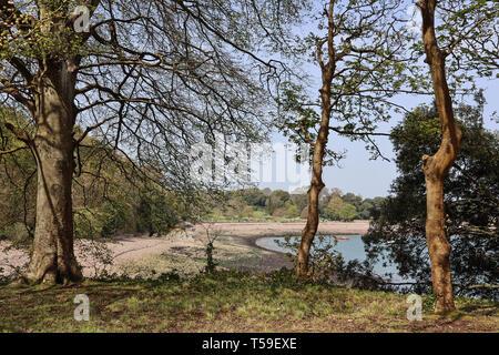 Barn Pool beach trough trees, Mount Edgcumbe Park Cornwall 2019 Easter. - Stock Photo