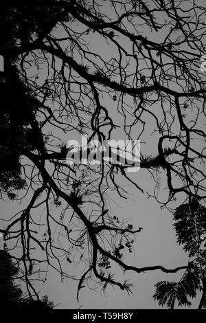 Tree branches silhouette in the cool morning - Stock Photo