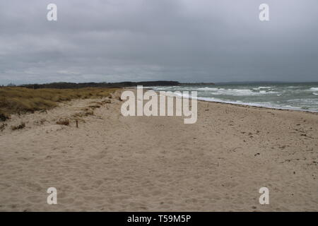 Strand Meer Möwe Wasser - Stock Photo
