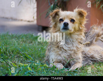 Stray dog victim of abandonment and cruelty - Stock Photo
