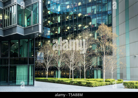 Silver Birch trees Betula pendula growing in front of modern glass fronted office buildings on the South Bank in London. - Stock Photo