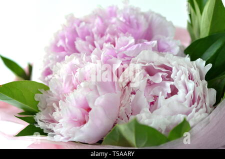 Light pink peony bouquet wrapped in tissue paper in tote bag with copy space
