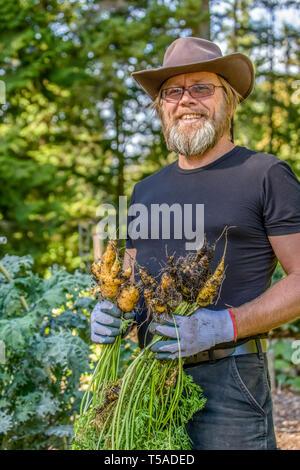 Issaquah, Washington, USA.  Man holding freshly harvested Solaris carrots in a garden.  (MR) - Stock Photo