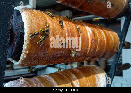 Close up view of the working bees on the honeycomb with sweet honey. Honey is beekeeping healthy produce - Stock Photo