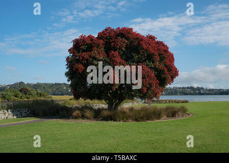 Auckland, New Zealand. - Stock Photo