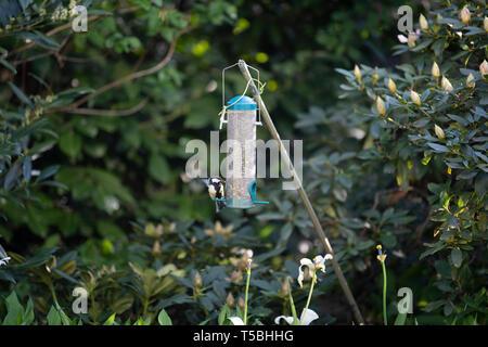 Ein Vogel pickt sich Körner aus einem Futterbehälter - Stock Photo