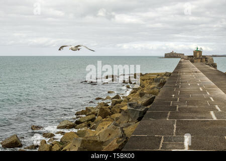 Cherbourg-Octeville, France - August 27, 2018: Seagull over fortifications dyke in the harbor of Cherbourg. Normandy, France - Stock Photo