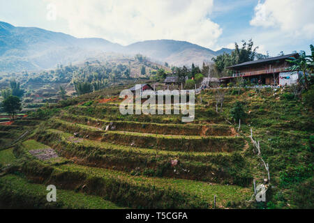 Rice fields on terraced in rainny season at SAPA, Lao Cai, Vietnam. Rice fields prepare for transplant at Northwest Vietnam. harvest from the rice fie - Stock Photo