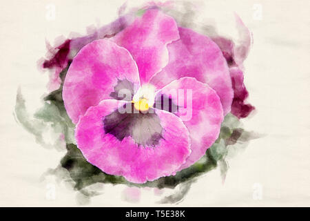 close-up of beautiful pink pansies in watercolors - Stock Photo