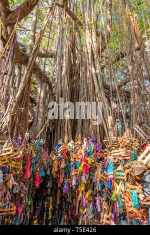 Vertical view of a wishing tree in Rameswaram, India. - Stock Photo