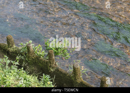 Wooden river flood management barrier, with some plants which have found an odd place to park themselves to grow. Metaphor erosion control. - Stock Photo