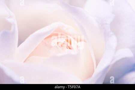 Macro shot of white rose bud. Shallow depth of field and pastel tones. - Stock Photo