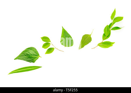 An overhead photo of a variety of green leaves, a flat lay composition with a place for text on a white background - Stock Photo