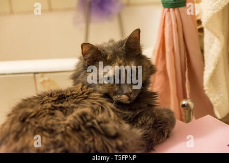 cat is resting at the bathroom - Stock Photo