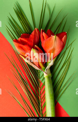 Red amaryllis flowers on bright red and green background - Stock Photo