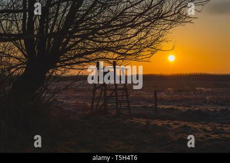 Ostsee, Darss, Sonnenaufgang, Winter, Kälte, Hochsitz - Stock Photo