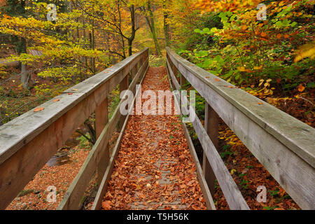 Germany, Saxony-Anhalt, Harz National Park, Bridge over Ilse-river in the Ilse Valley with autumn leaves - Stock Photo