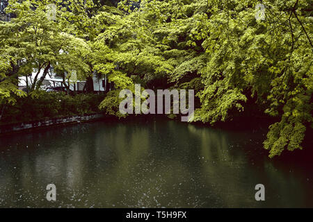 Rain falling on a pond and green maple trees in Kyoto, Japan during Spring storm - Stock Photo