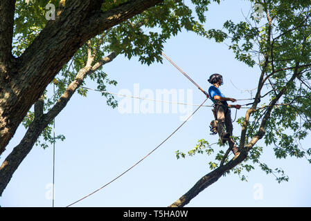 Man Cutting Down Tree With Chainsaw - Stock Photo