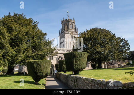 The church of St Andrew, Colyton, Devon. with clipped yew tress in the garden. - Stock Photo