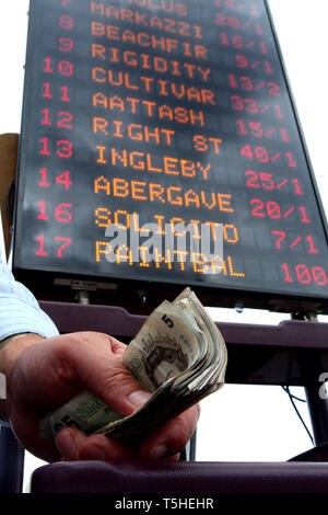 Bookmaker with a wad of cash in his hand. Goodwood racecourse. 29.7.2010. - Stock Photo