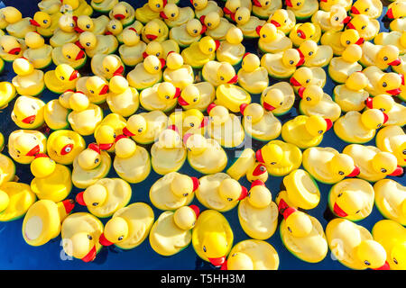 Many rubber yellow toy ducks floating in children's pool close up - Stock Photo