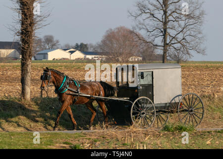 An Amish horse buggy drawn by a beautiful brown horse, Lancaster County, PA - Stock Photo
