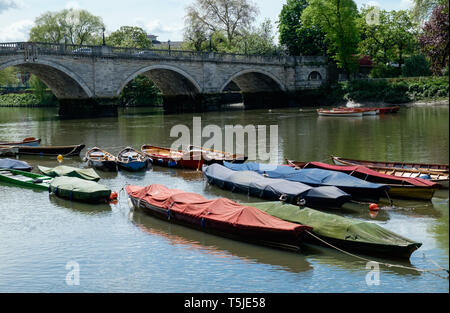 Colourful docked row boats on the River Thames at Richmond, looking at west bank, with Richmond Bridge in background. May, 2018 - Stock Photo