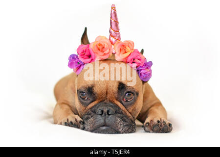 Cute brown French Bulldog dog with pink flower and unicorn horn headband lying on ground in front of white studio background - Stock Photo