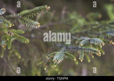 detailed foliage - Stock Photo